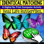 Special Education Distance Learning | Matching IDENTICAL Butterflies | NO PRINT