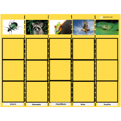 Animal Category Sorting for Autism