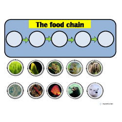 Food Chains Cut & Paste