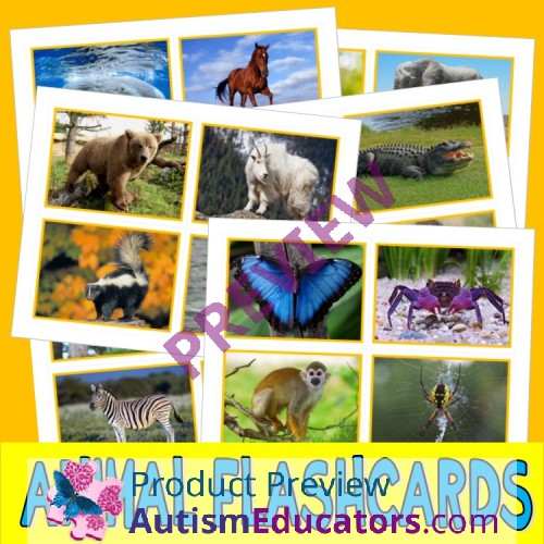 ANIMALS PHOTO FLASHCARDS zoology autism aba speech therapy pecs card  activity