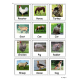 Farm Animals  Cards for Autism, Pecs, Visuals, Speech Therapy, ABA