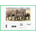 Zoo Animals Building Sentences Activity for Speech Therapy