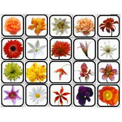 Flowers Picture Matching/Flashcards/Memory Game for Autism