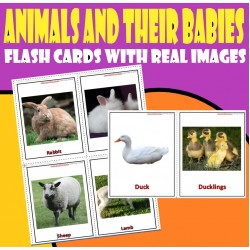 Animals and their babies - Flash cards and  task cards - with real images