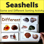 Seashells Same and Different Sorting Activity